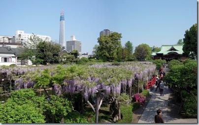 Panorama100501B